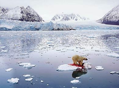 La banquise arctique en pleine débâcle